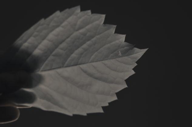 kızılötesi fotoğrafçılıkta bitki yaprağının gri kart gibi kullanılması